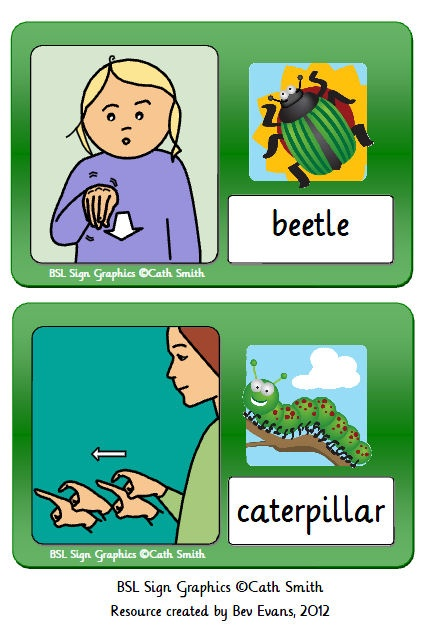 Clear and colourful minibeast flash cards