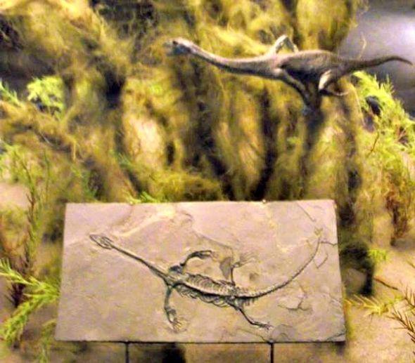 sea dragon dinosaur dinosaur coloring pagesdinosaur