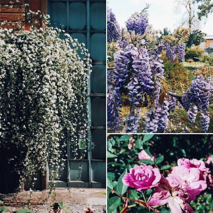 Qua continua a piovere e non mi resta che guardare le foto di un mese fa quando era estate ed ero ai giardini botanici di #firenze a fotografare fiori come se non ci fosse un domani  #fb  #flowerslovers #italy #florence #botanicalgardens