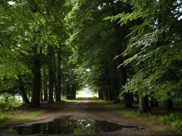 Het bos in Lage Vuursche
