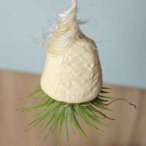 Airplant with ceramic hanging planter (stoneware) | €19.90