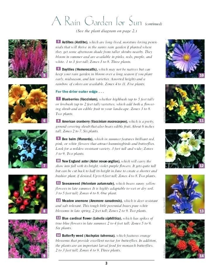 Perennial Flowers For Shade Zone 5 Shade Garden Perennials Zone 4