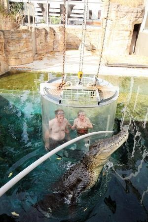Darwin #Australia Crocosaurus Cove - Cage of Death!  http://www.tripadvisor.com.au/ShowForum-g255066-i1010-Darwin_Top_End_Northern_Territory.html