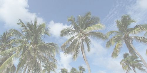 palm trees // summer ~ twitter header or cover photo ...