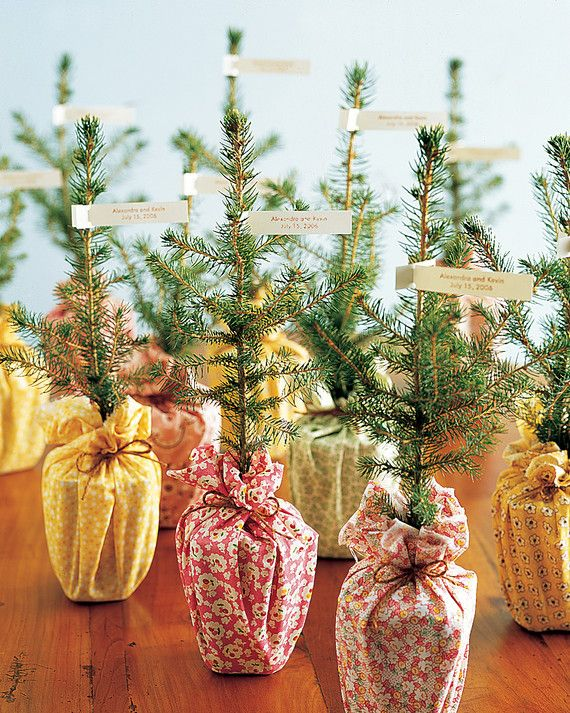 Many online nurseries offer large quantities of tree seedings—these foot-tall spruces are an environment-friendly takeway that give guests a living memory to cherish always.