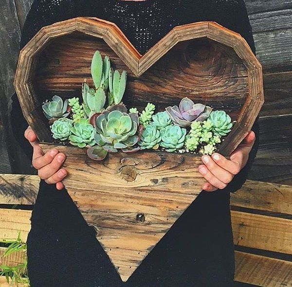 15+ Fascinating Succulent Plants Designs