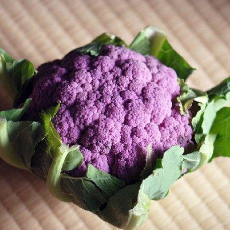 金种子商城(www.bjgseed.com)高档花菜种子,特色花菜种子