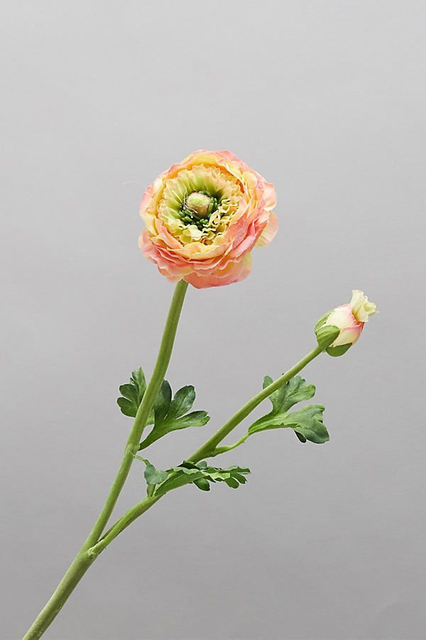 Faux Ranunculus Stem In 2020 Ranunculus Bouquet Ranunculus Arrangement Ranunculus