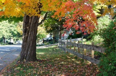 Autumn in my neighbourhood in the Highland Park, Westboro, first house