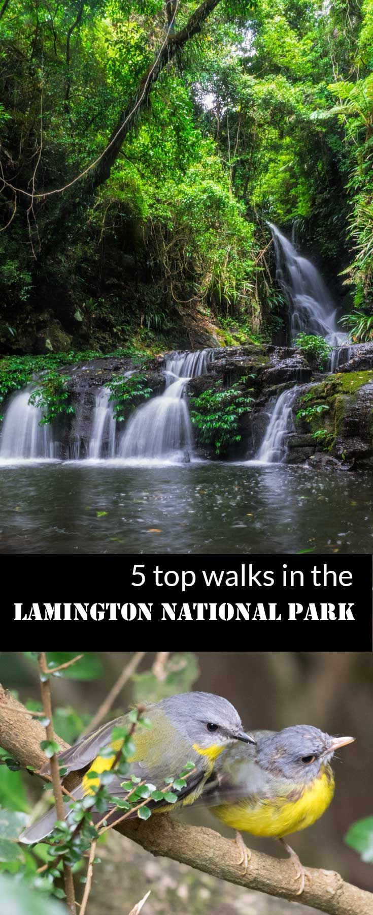 Lamington National Park, Queensland Australia. Part of the largest tract of sub tropical rainforest in the world