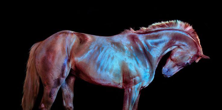 Andrew McGibbon Photographer: Photos, Animals, Equine, Art, Beautiful, Bow, Andrew Mcgibbon, Photography, Wild Horses
