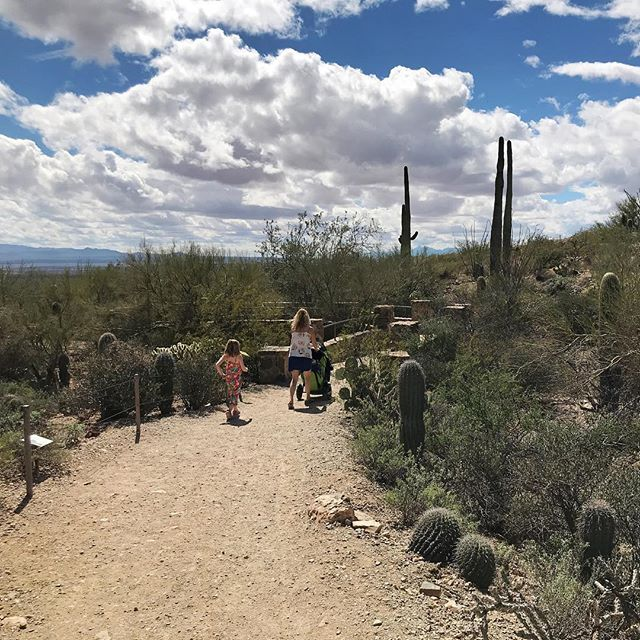 Spent the day exploring the Arizona Sonora Desert Museum. An amazing and educational adventure for kids!
