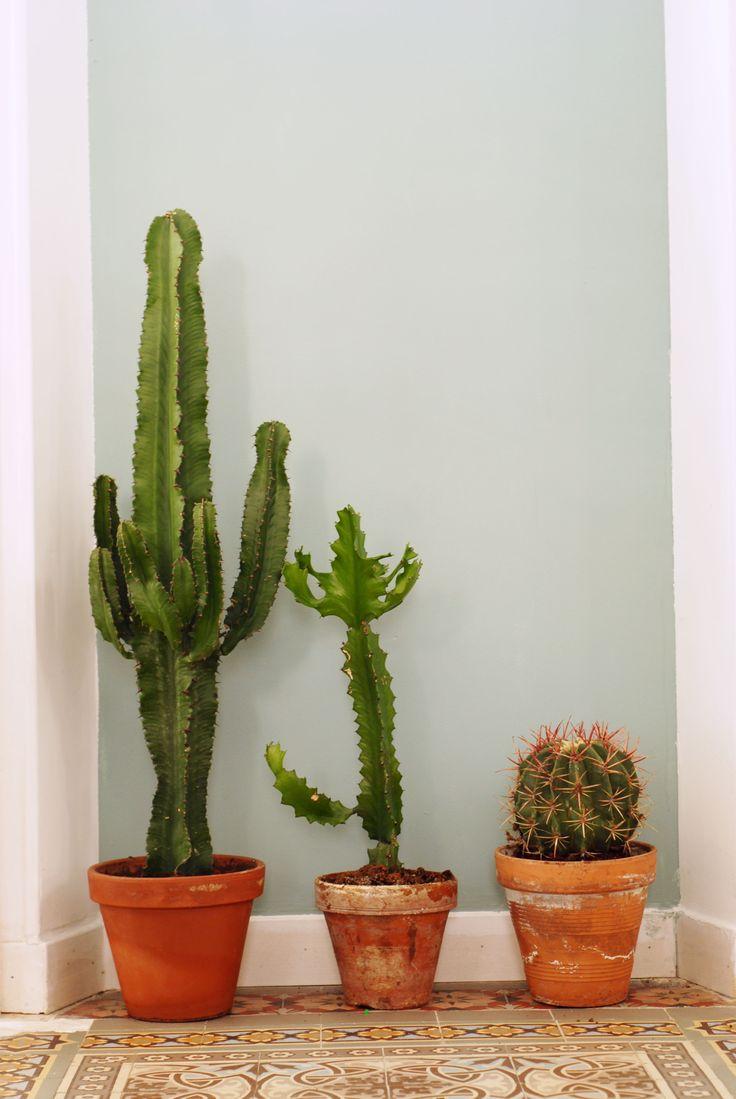 très beaux cactus!