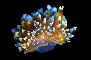 Dive into the bizarre and beautiful world of nudibranchs with this amazing photo gallery compiled from Scuba Diving Magazine's 2014 Photo Contest submissions! #ScubaDivingInfographicsandQuotes