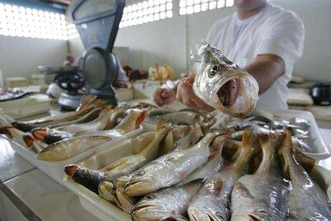 Mercado dos Pescadores de Matinhos.