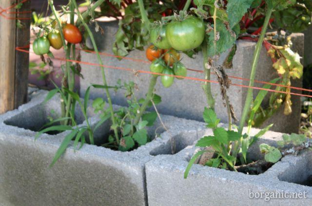 b. organic cinder block gardening