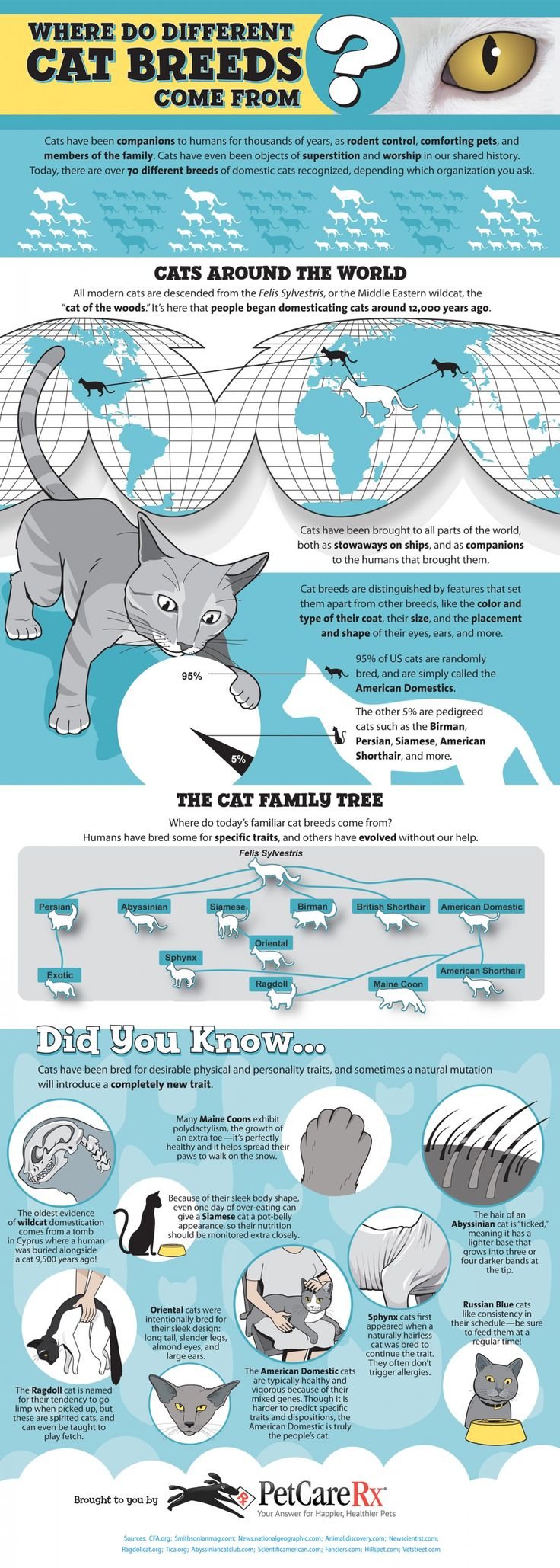 71 best Cat Infographics images on Pinterest