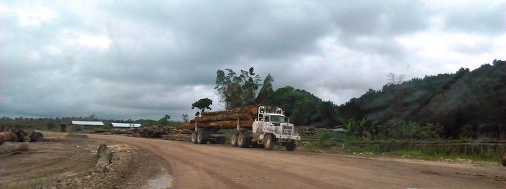 Logging has extended way beyond the boundaries of the plantation