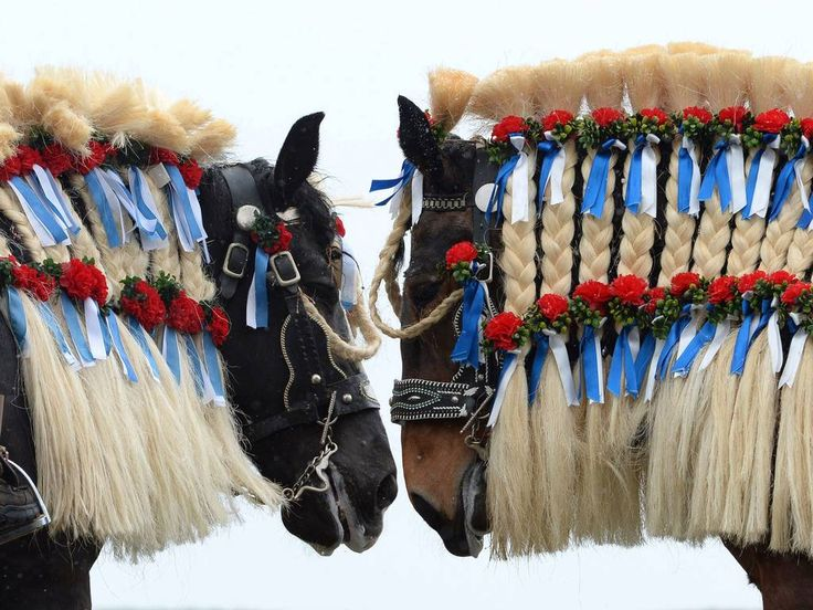 6 April 2015 Horses are decorated in Bavarian colours during the traditional St Georgi Ride on Easter Monday, in Traunstein, southern Germany. The annual ride is a horse pilgrimage to honor Saint George and takes the participants from the Bavarian town of Traunstein to the chapel of Ettendorf, where they are blessed