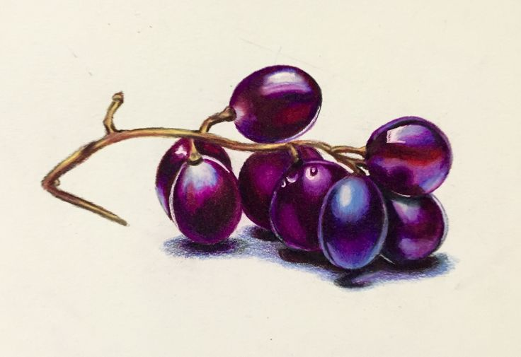 Grape study using prismacolor  colored pencil on 5x7 Bristol vellum