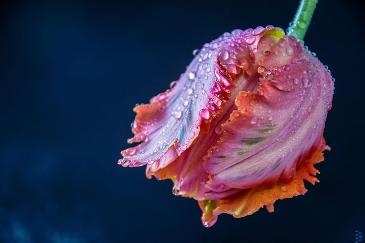 Drops by Denis Goga on 500px