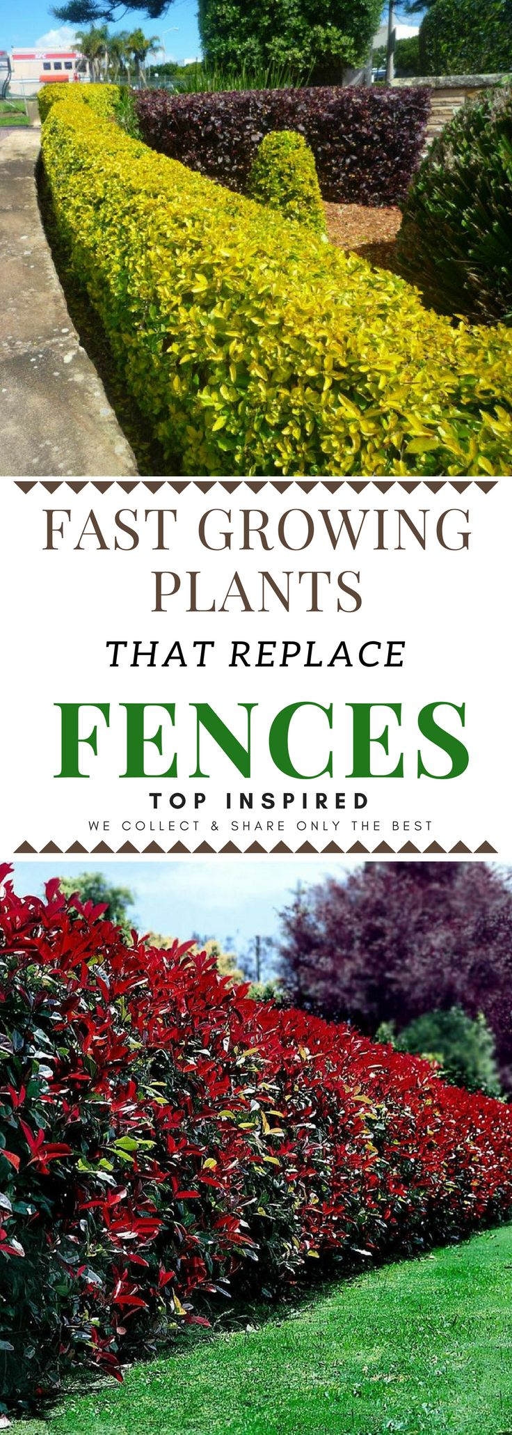 Think about what is the most important thing to you about the fence in order to take a good decision on which plant to choose. Read on to learn about some really good options you can choose from and start planting. #Hedges
