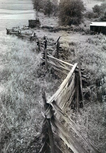 Garrett County provides this example of what is variously designated the worm, snake and zigzag fence. (A. Aubrey Bodine/Baltimore Sun/September 4, 1949):