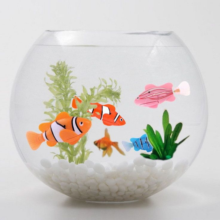 1000 ideas about fish bowl centerpieces on pinterest for Robo fish tank