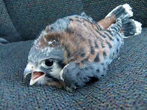 ¿Angry Bird?