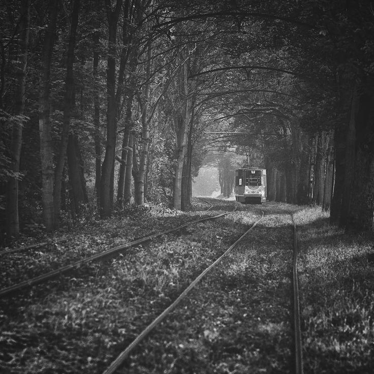 Forest tram by *RafalBigda  Tramway in Zabrze, Upper Silesia, Poland