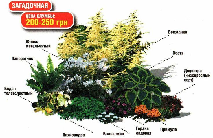 клумба в тени схема: 8 тыс изображений найдено в Яндекс.Картинках