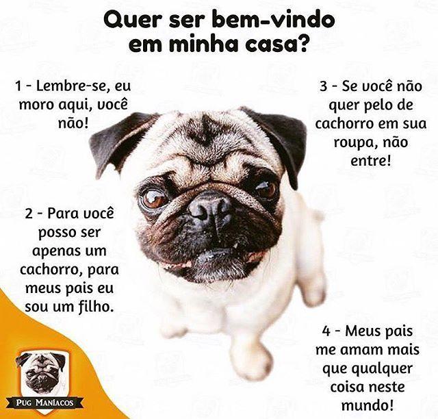 ISSO MESMO!❤❤❤ #cachorro  #bomdia  #amocachorro  #filhode4patas  ##gato  #sabado  #cachorroétudodebom  #pug  #petmeupet