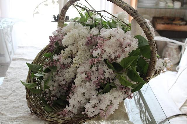 Lilacs in old basket  Rebecca Ersfeld's blog
