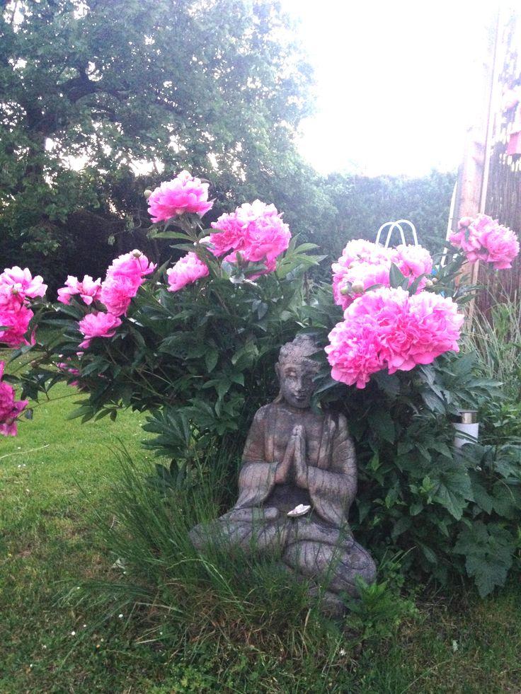 Gartenmagazin Buddha