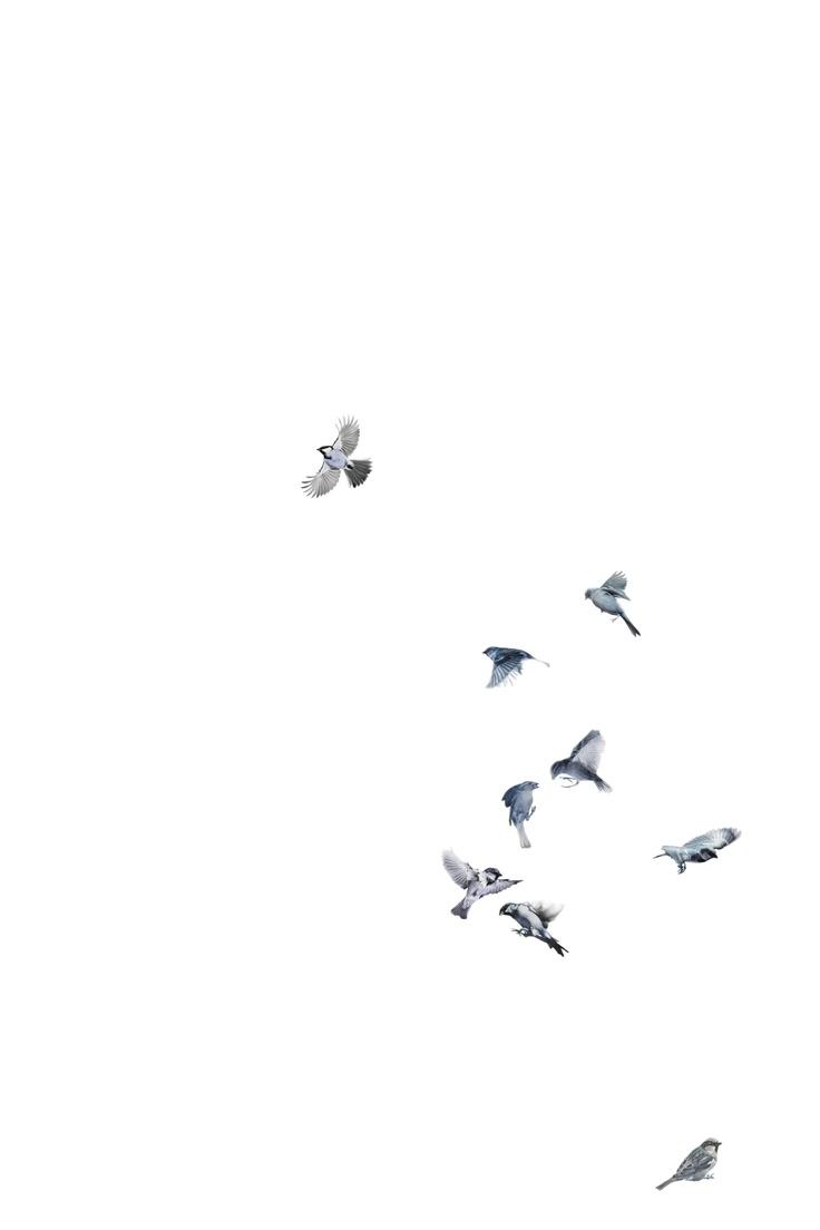 vogeltjes behang