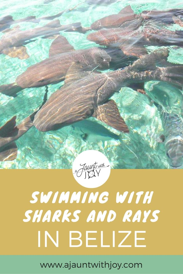Snorkeling Shark Ray Alley In Belize — A Jaunt With Joy. Swimming and snorkeling with nurse sharks and rays in Belize's oldest marine reserve was easily one of my greatest travel moments. Hol Chan Marine Reserve accessed via Caye Caulker, Belize. www.ajauntwithjoy.com