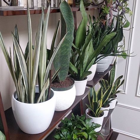 Happy #foliagefriday - FAQ: white pots can be found pretty much anywhere pots are sold     #Regram via @houseplantjournal