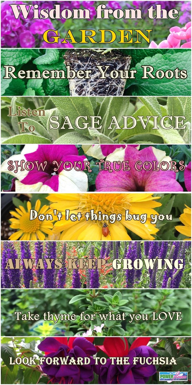 Wisdom from the Garden A fun collection of gardening