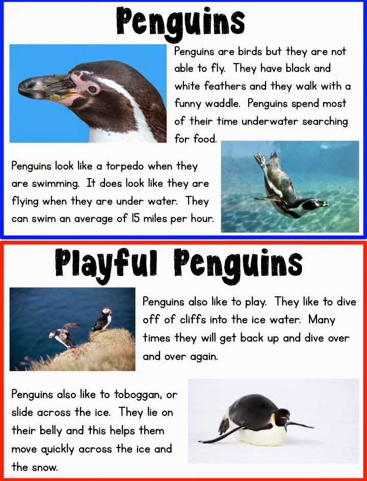 FREE! Kid-Friendly Penguin Research