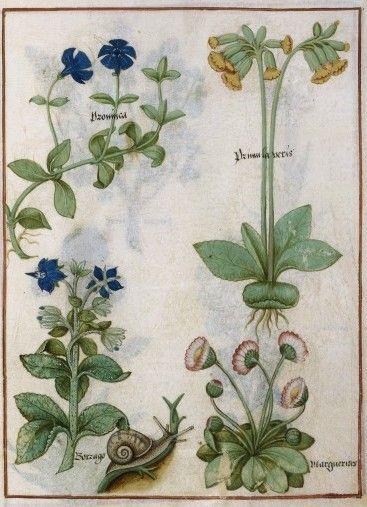 Botanical - Medieval -  (6)