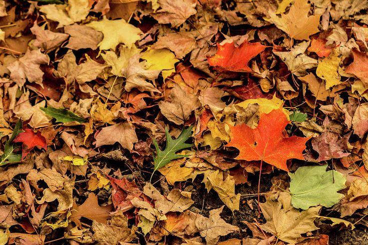 Olga Olay Photograph - Carpet From Fallen Leaves by Olga Olay #OlgaOlayFineArtPhotography #ArtForHome #FineArtPrints #Fall #Homedecor