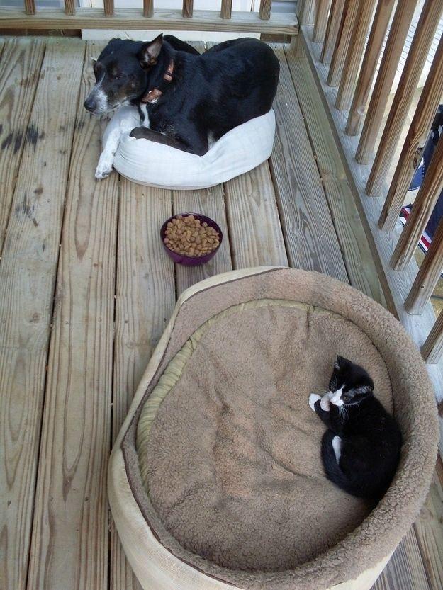 Parfois, les chiens ne peuvent même pas manger leur sont si désemparés.