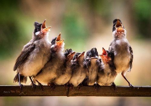 Choir by Tuan Tran