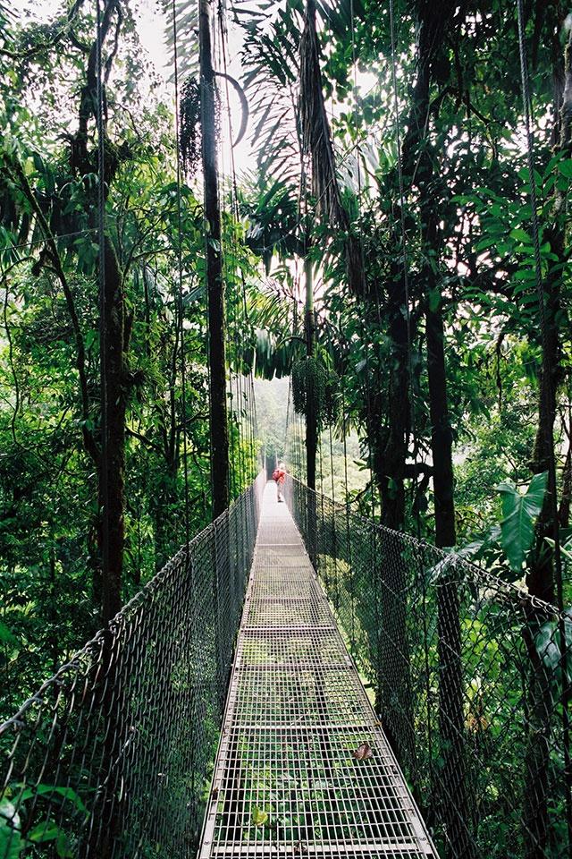 Hanging Bridges in the Costa Rican Rainforest (Future)