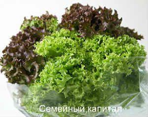 как хранить зеленые листовые овощи_салаты
