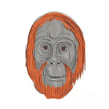 Unflanged Male Orangutan Drawing by Aloysius Patrimonio