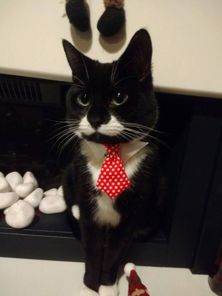 My Lovely Cute Pets Cute Cats And Dogs Fancy Cats Business Cat