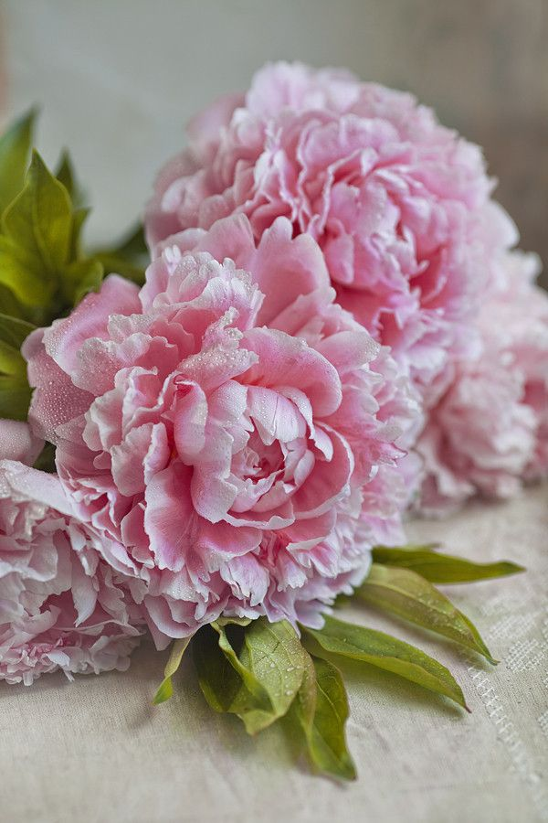 you can never go wrong with pink peonies