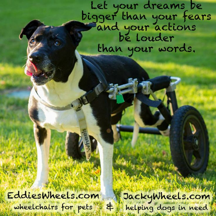 Let Your Dreams Be Ger Than Fears And Actions Louder Words Dog Wheelchairwheelchairs