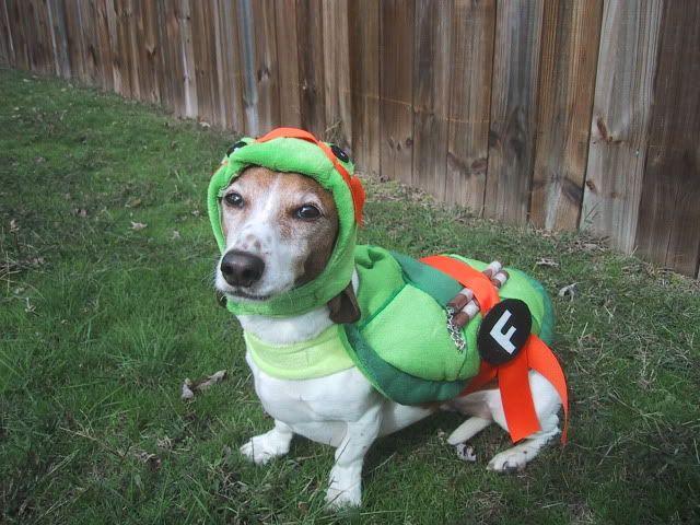23 best Pet Halloween Costumes images on Pinterest | Animals ...